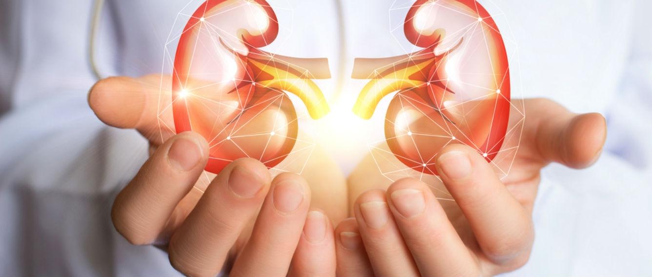 Descubren un potencial blanco terapéutico para la insuficiencia renal aguda