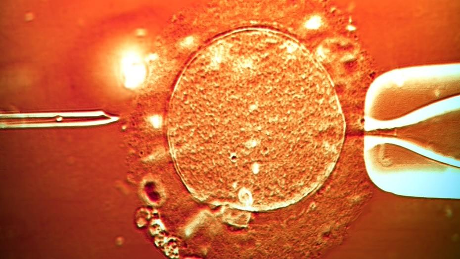 Nacieron unos 25 mil niños gracias a la sanción de la ley de fertilización asistida