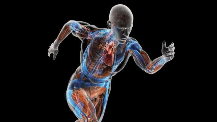 La comunicación entre órganos y tejidos que regula la energía del cuerpo